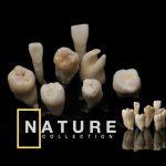 dental photography miladinov milos dentalpromaster .187