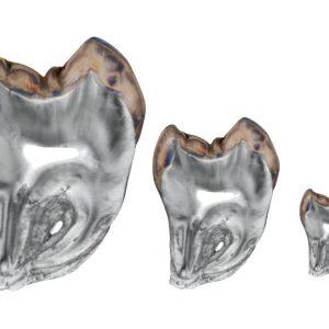 crosspolarization dental photography